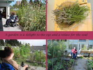 Scenes from the Pearson Community Gardens