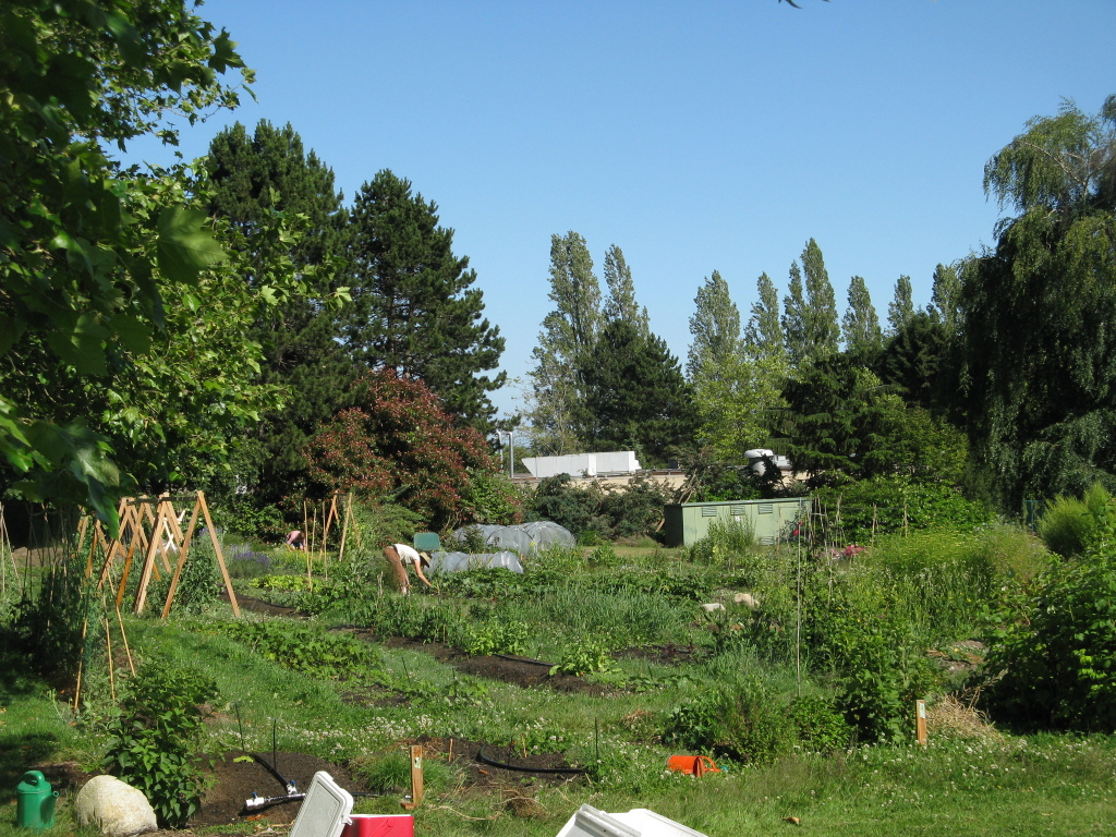 This image depicts the Farmers on 57th Garden in July. It is lush and sunny with blue skies.